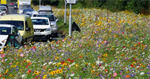 Some of England's roadsides are positively blooming