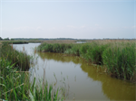 £1 million target reached to secure future of international wetland Hickling Broad