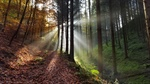 How 'Forest Bathing' keeps us well